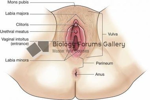 Hole between vagina and urethra